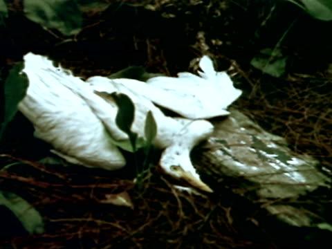 medium - water bird stock videos & royalty-free footage