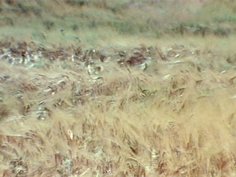 medium - prairie stock videos & royalty-free footage
