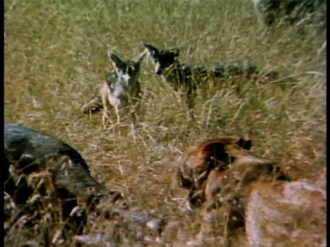 vídeos y material grabado en eventos de stock de medium - oreja animal