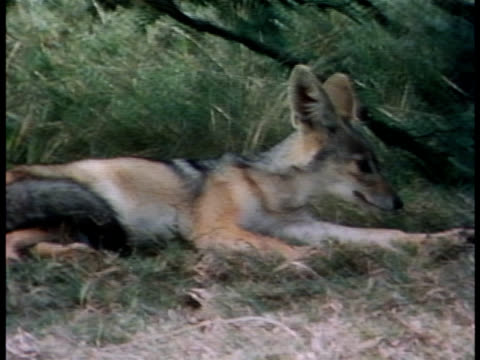 medium - animal ear stock videos & royalty-free footage