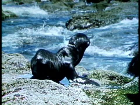 stockvideo's en b-roll-footage met medium - in het water levend organisme