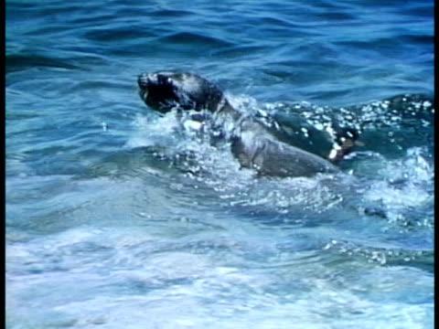 medium - seal pup stock videos & royalty-free footage