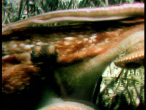 medium - anmut stock-videos und b-roll-filmmaterial