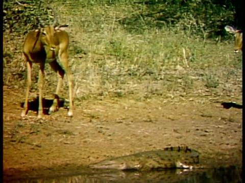 vídeos de stock, filmes e b-roll de medium - animais caçando