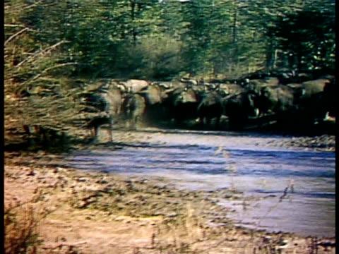 medium - water buffalo stock videos & royalty-free footage