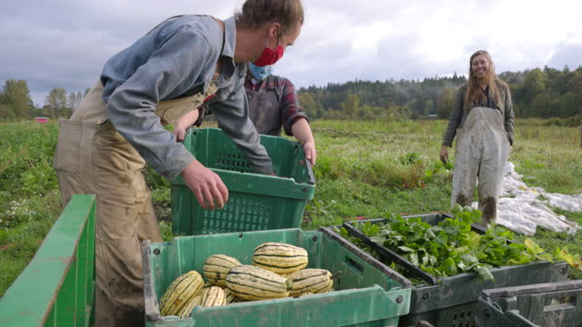 medium wide shot of smiling farmers loading bins of freshly harvested organic produce onto tractor on fall morning - social issues stock videos & royalty-free footage