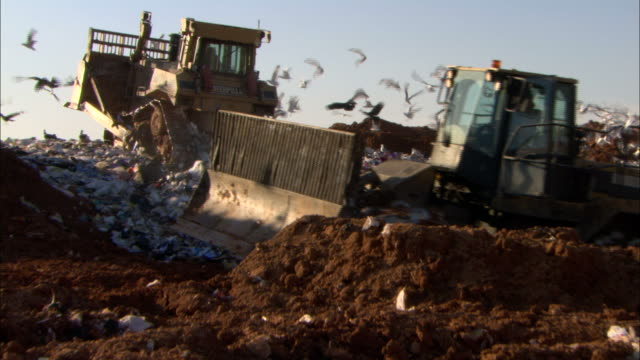 medium zoom-out - bulldozers drive over a landfill where seagulls congregate - seagull stock videos and b-roll footage