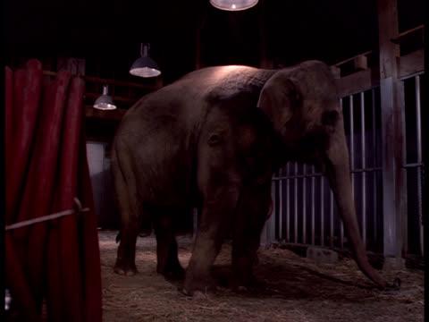 Medium-shot of an elephant standing in an enclosure.