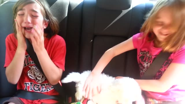 meeting your pet for the first time is always an emotional experience. watch how this girl reacts after her parents reveal their new bichon frise... - knähund bildbanksvideor och videomaterial från bakom kulisserna