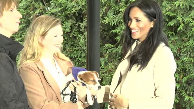 "meghan duchess of sussex visits mayhew dog and cat sanctuary and meets owner and her dog who says it is a bit overwhelming, meghan replies ""i know"" - journalismus stock-videos und b-roll-filmmaterial"