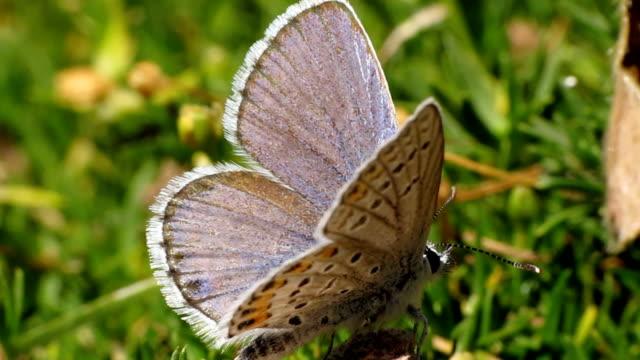 vidéos et rushes de melissa bleu nacré - des papillons dans le ventre