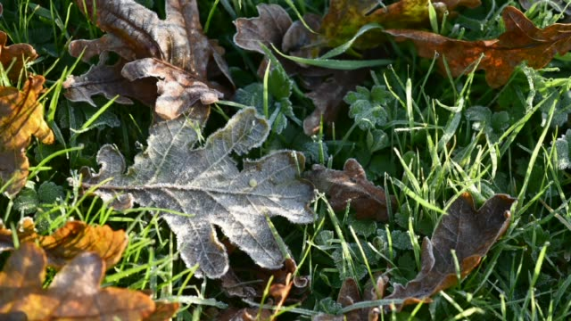 Melting frost on Autumn leaves