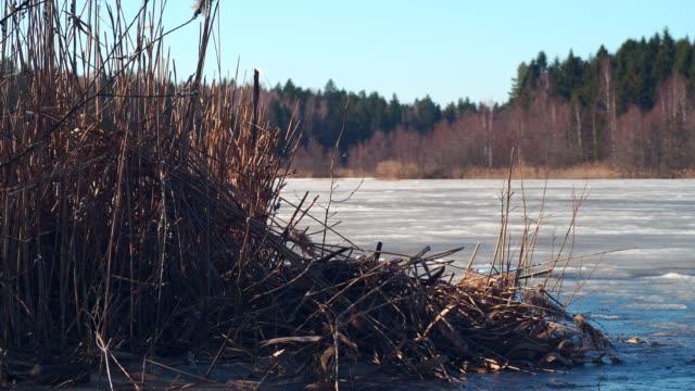 smältande is på älven - is bildbanksvideor och videomaterial från bakom kulisserna
