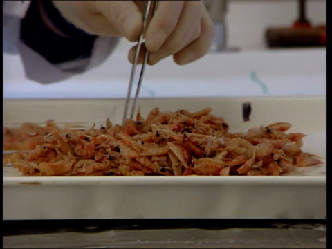 vidéos et rushes de melting icecaps reducing stocks of krill; itn lib tx 27.1.1999 antarctica: krill in tray ext albatrosses colony of penguins tx 10.3.1991 ice floes in... - organisme aquatique