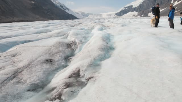 meltwater at the snout of the athabasca glacier which is receding extremely rapidly and has lost over 60% of its ice mass in less than 150 years.... - animal nose stock videos & royalty-free footage