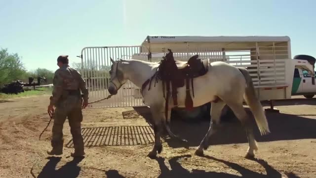 a member of the tucson border patrol search trauma and rescue unit saddles up horse and loads into livestock trailer - saddle stock videos & royalty-free footage