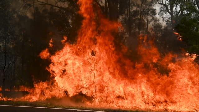 member works on controlled back burns along putty road crews are working hard to gain the upper hand after devastating fires tore through areas near... - australia stock videos & royalty-free footage