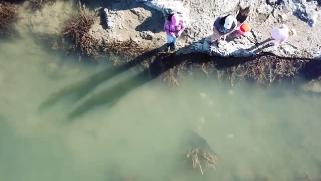 members of a new zealand family were surprised on december 31 when they happened upon a school of sharks swimming in remote shallow rock pools during... - swimming stock videos & royalty-free footage
