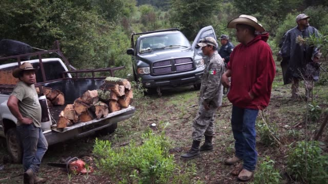 members of the forest keepers of cheran apprehend an illegal logger in cheran, michoacan, mexico on june 9, 2017. shots: wide shot of patrol... - michoacán video stock e b–roll