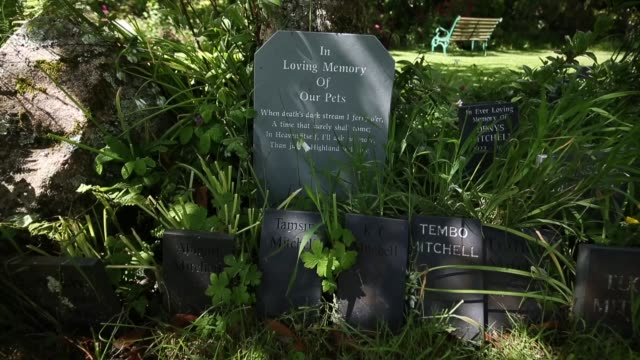 35 Pet Cemetery Video Clips & Footage - Getty Images