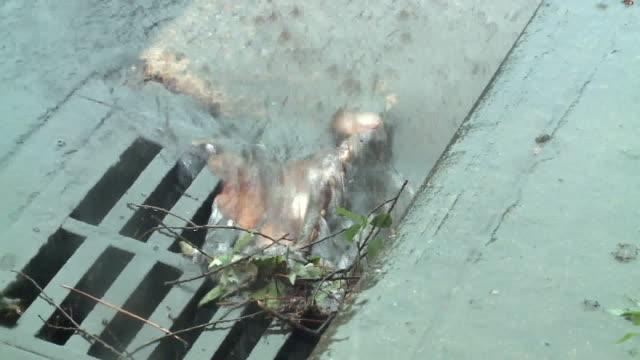 memphis, tn, u.s. - close-ups of rainwater in river and puddles in memphis on friday, august 28, 2020. - sidewalk gutter stock videos & royalty-free footage