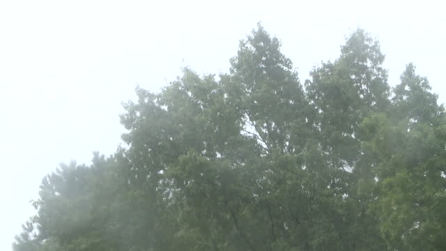 memphis, tn, u.s. - heavy rain in memphis on friday, august 28, 2020. - sidewalk gutter stock videos & royalty-free footage