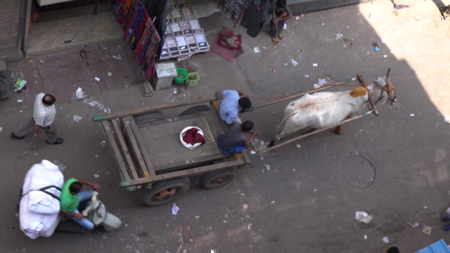 men and cow pulling cart on street in delhi, india - spirituality stock videos & royalty-free footage