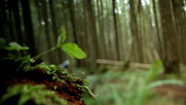 MS Men and woman mountain biking through forest / Squamish, British Columbia, Canada