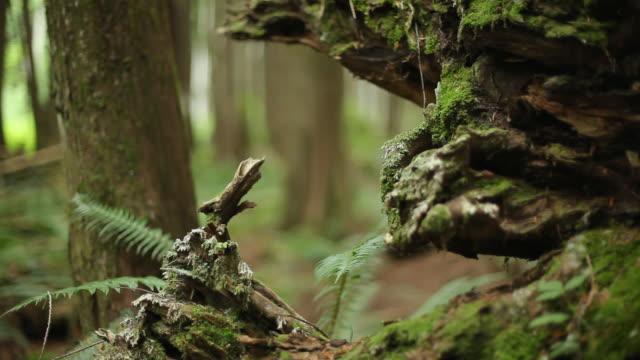 WS R/F PAN Men and woman mountain biking through forest / Squamish, British Columbia, Canada