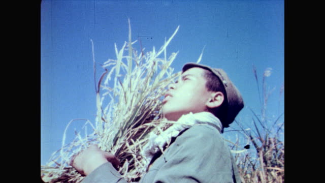 / men and women harvest grain / young boy holding bundle of grain looks up into the sky / smiling woman holds bundle of grain up for the camera... - 戦後点の映像素材/bロール