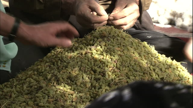 stockvideo's en b-roll-footage met men and women inspect raisins in a courtyard in silk road china - rozijn