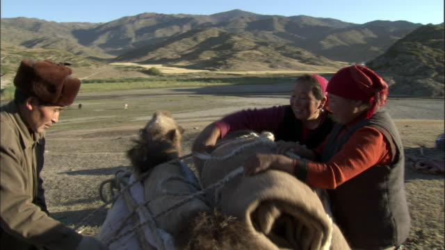men and women lash rolls of material to the back of a camel, kalamaili nature reserve, xinjiang, china - indigenous culture stock videos & royalty-free footage