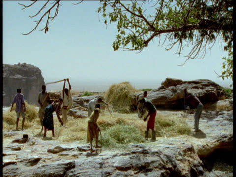 men and women thresh millet by beating the crop with large sticks, mali - マリ点の映像素材/bロール