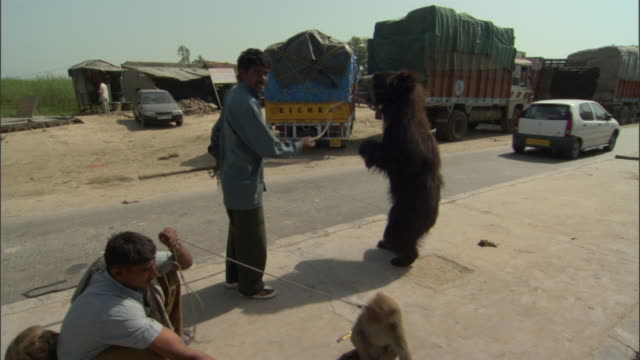 vidéos et rushes de ms zi men at roadside with performing golden monkey and dancing bear, agra, uttar pradesh, india - dancing bear