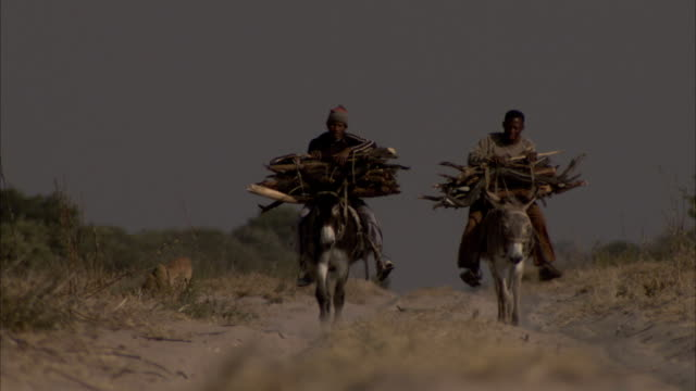 vídeos y material grabado en eventos de stock de men carry bundles of firewood as they ride donkeys along a dirt road. available in hd. - leña