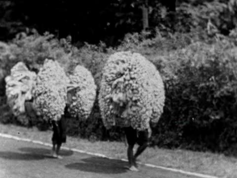 vídeos y material grabado en eventos de stock de men carry large bundles of palm sugar - java