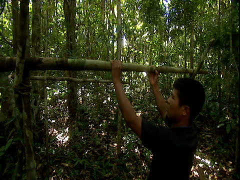 men chop long wooden branches before placing as horizontal support on jungle camp structure amazon rainforest venezuela - erezione video stock e b–roll