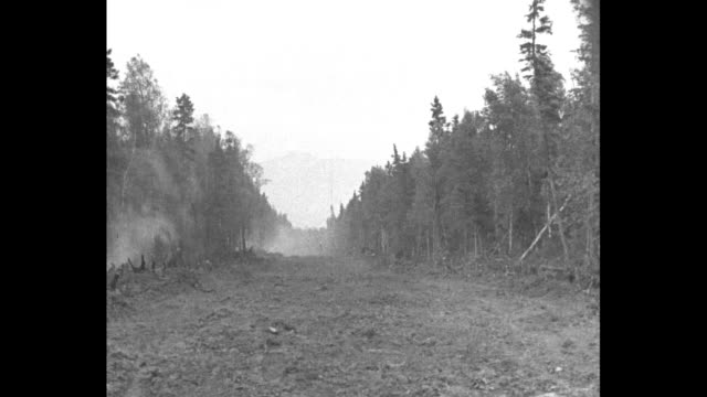 men chopping at stumps with work horses and a cleared swath in forest / men fell a tree / log being processed at modest sawmill / men working at... - forester stock videos and b-roll footage