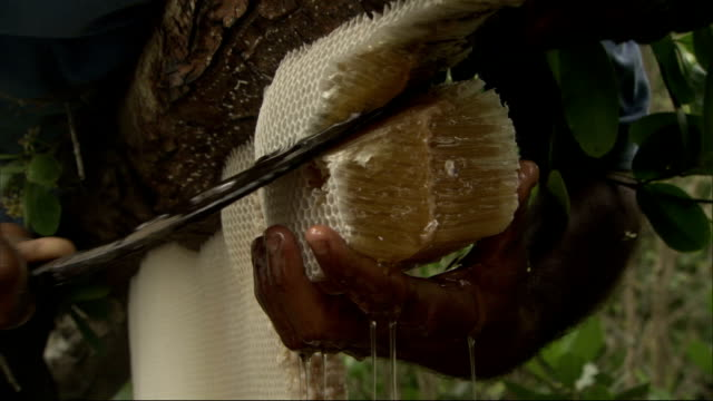 men cutting honeycomb from nest available in hd. - collection stock videos and b-roll footage