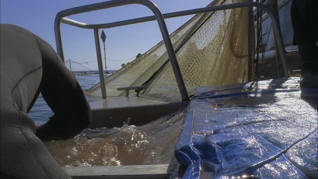 cu slo mo men cutting open fish from sea water / moorea, tahiti, french polynesia - moorea stock videos & royalty-free footage