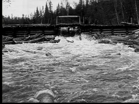 1927 b/w ws pan ms men directing floating logs through sluice into ranger lake, ontario, canada - log stock videos & royalty-free footage