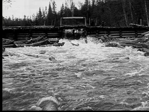 1927 b/w ws pan ms men directing floating logs through sluice into ranger lake, ontario, canada - log stock videos & royalty-free footage