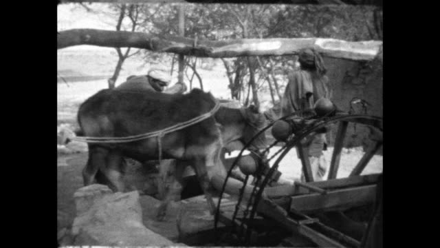 men drive oxen attached to wheel to extract water from well into an irrigation system british men and women stand nearby watching - water wheel stock videos and b-roll footage