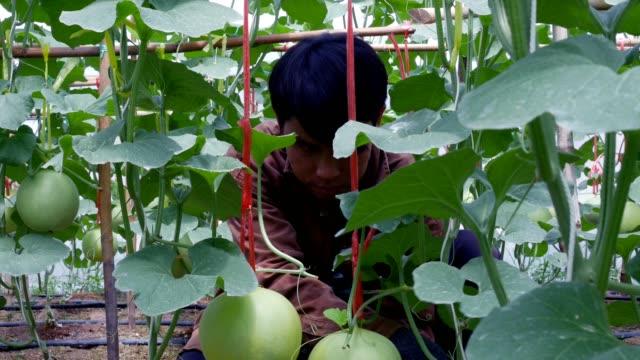 vídeos y material grabado en eventos de stock de granjero de hombres trabajando en un invernadero - árbol de hoja caduca