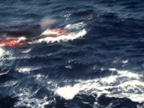 men firing harpoon blood into water males walking on ship ws sperm whale w/ tail in air harpoon line running from boat - arpone video stock e b–roll