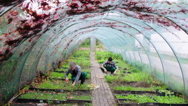 men gardening in an eco-garden - community garden stock videos & royalty-free footage