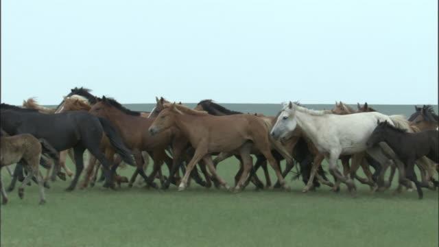 vídeos y material grabado en eventos de stock de men herd horses on steppe, inner mongolia, china - grupo de animales