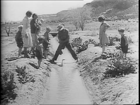 men in a field of barley / man pointing on top of a hill / boy walking leading a mule / sheep running through a field / footage form 1937 dustbowl... - korn hordeum bildbanksvideor och videomaterial från bakom kulisserna