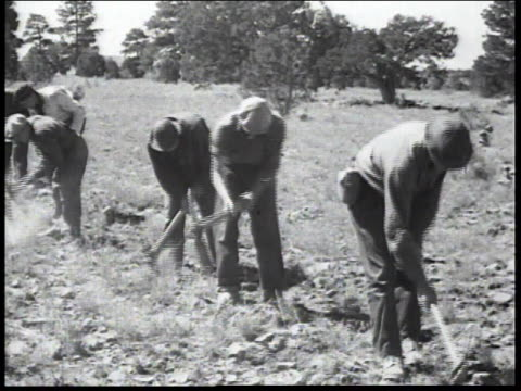 1936 montage men in the civilian conservation corps breaking up soil with picks and clearing brush / united states - civilian conservation corps stock-videos und b-roll-filmmaterial
