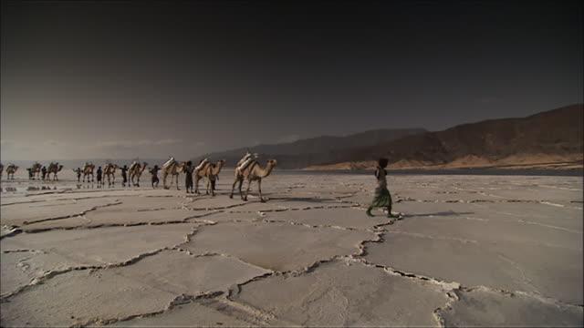 WS Men in traditional dress lead camel train on salt flat / Republic of Djibouti